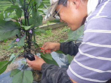 自然栽培の農作業