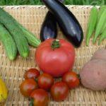 自然栽培で育てた野菜たち