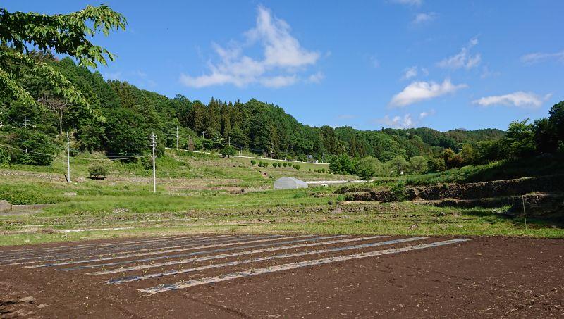 ナチュラルハートの畑