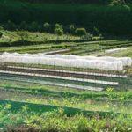 自然栽培の畑