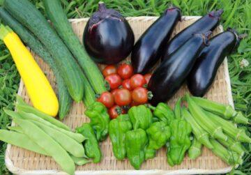 安全でおいしい自然栽培の野菜たち